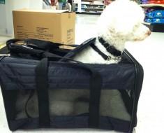 poodle en el avion