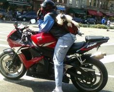 Poodle motorizado