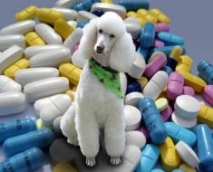 medicinas-poodle