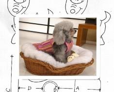 abrigo para poodle