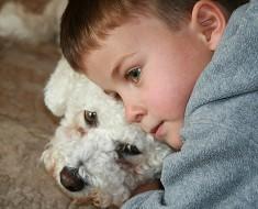 niño abraza a poodle