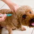 La importancia de la vacunación en nuestras mascotas