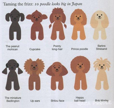 Cortes de pelo para poodles estilo japonés