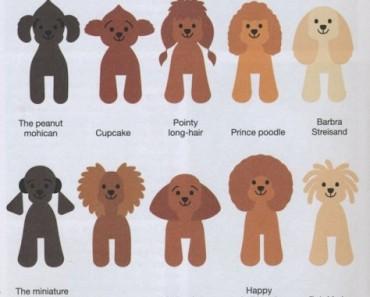 cortes de pelo estilo japones para perros