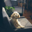 Fundamentos de filosofía canina