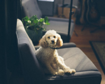 filosofia-canina